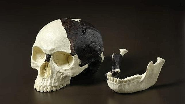 Various plastic skulls and remains designed for educational purposes